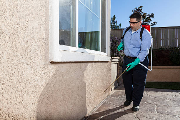 Tips for Picking the Ideal Pest Management Company